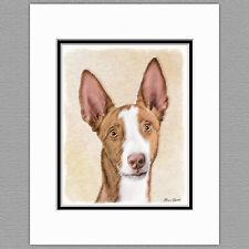 Ibizan Hound Dog Original Art Print 8x10 Matted to 11x14