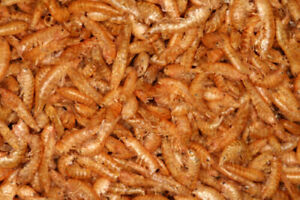 Krill, Freeze Dried Krill for ALL Fish, Koi, Turtles and more(1/2 Pound bag)