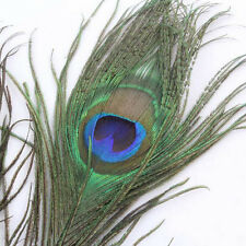 10X Hot Novelty Green Long Artificial Peacock Tail Feather For DIY Bouquet Decor