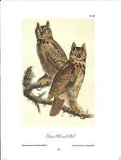 Great Horned-Owl Vintage Bird Print by John James Audubon