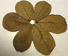 1,00 € für 6 Seemandelbaumblätter ca.10-20cm !!!! Mengenrabatt: +5, +15, +30