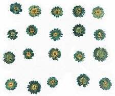 Pressed Flowers Blue Apricot Blossom 20pcs, jewellery making floral art craft