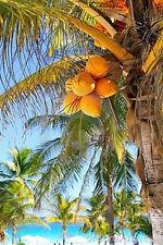 Carribbean Coconut Premium Grade Fragrance Oil 2 oz