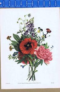 A JUNE BOUQUET, Jean Louis Prevost - 1937 Color Botanical Print