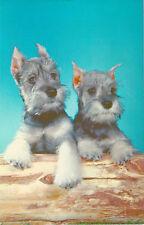VINTAGE SCOTTISH TERRIER DOG PUPPY PUPPIES POSTCARD UNUSED
