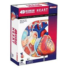 4D Master Human Anatomy Heart Anatomy Model 31 Parts with Stand and Guide - NEW!