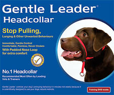 Dogs Gentle Leader Collar Medium Purlple Dog Training & Behaviour by Beau PE