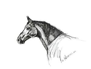 A4 print  ink sketch equestrian art. Horses head Contemporary modern black white
