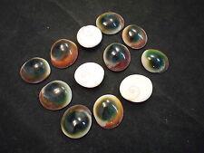 "12 Red Cat Eye Shells Seashells Operculum 1/2"" - 1"" Crafts Decor Rare Find"