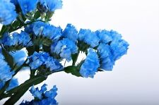 50+ Heavenly Blue Statice Flower Seeds / Long Lasting Annual / Great Gift