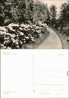 Ansichtskarte Kamenz Kamjenc Hutberg - Blumenweg 1970