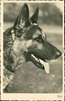Ansichtskarte  Tiere - Hunde - Schäferhund 1930