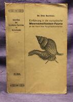 Buchner Einführung in die europäische Meeresmollusken- Fauna 1913 Weichtiere js