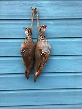 More details for a hanging brace taxidermy red legged partridge alectoris rufa