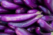 Eggplant Long Purple Vegetable Garden Seeds 200+ NON-GMO USA FREE SHIPPING