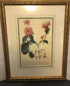 Framed  Antique Botanical Reproduction  print bee balm monarda gold frame pinks