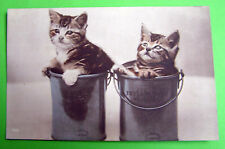 Cat Real Photographic (RP) Collectable Animal Postcards