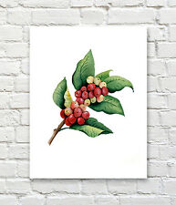 "Coffee Plan Art Printt Watercolor 11"" x 14"" Painting by Artist DJR"