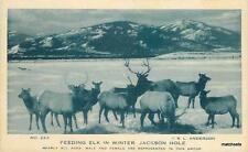 1920s Feeding Elk in Winter Jackson Hole Wyoming Anderson postcard 5828