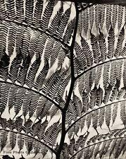 1955 Vintage BRETT WESTON Giant Fern Botanical Abstract Original Photo Engraving