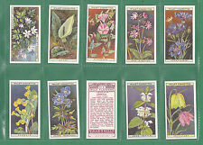 Flowers/Garden Collectable Will's Cigarette Cards