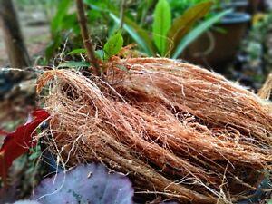 Home Gardening 100% Natural Eco-Friendly Protect Plants Coconut Husk Fiber 100g