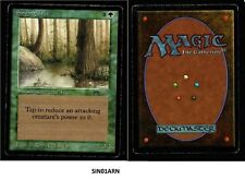 MRM ENGLISH Singing Tree Poor MTG magic Arabian Nights ( SIN01ARN)