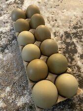 12+ Olive Egger Hatching Eggs