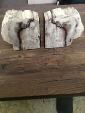 More details for petrified wood pair bookends fossil tree.