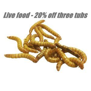 Mealworms in cartons / tubs livefood for reptiles tarantulas geckos & wild birds