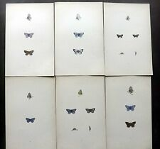 Rev Francis Morris 1904 Lot of 6 Hand Col Butterfly Prints. Book Plates