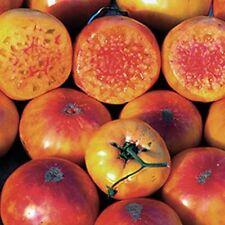 """Ungarische Tomatensamen""""Hillbilly Kartoffel"""", seltene Form,organische Tomaten"""