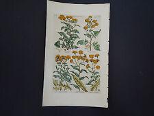 Sir John Hill, Botanical, The Vegetable System 1761-1775 Sow Thistle #22