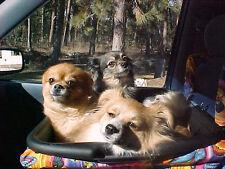 The ORIGINAL ZOE DOG CAR SEAT-BIGGEST CARSEAT ON EBAY!  MAKES TRAVELING FUN!!!