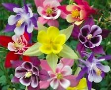 "Akelei bunte Mischung ""McKanas Giant"" Samen Blumensamen"
