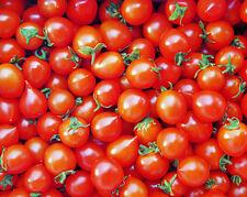 """Tomate """"Piccolo Cherry"""" 12 Semillas"""