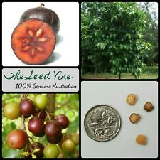 10+ INDIAN COFFEE PLUM TREE SEEDS (Flacourtia jangomas) Edible Fruit Sacred