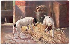 SMOOTH FOX TERRIER TWO DOGS CHASE RAT OLD DOG ART POSTCARD