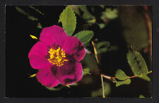 c1950 Briar Rose Artic Flower Fort Yukon Alaska postcard