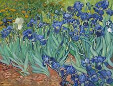 IRISES 1889 Vincent Van Gogh Floral Giclee CANVAS ART PRINT 30x24 in.
