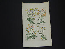 Sir John Hill, Botanical, The Vegetable System 1761-1775 Wall-Lettuce #13