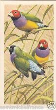 Diamant de Gould Erythrura gouldiae - Gouldian Finch OISEAU BIRD IMAGE CARD 1961