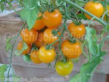TUMBLING TOM gelb*Hänge-Tomate *Tomaten Balkon*10 Samen