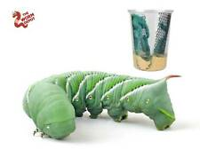 "25-35 Live Hornworms ""Goliath Worms"" With extra food to grow to 4"" Adult Worms"