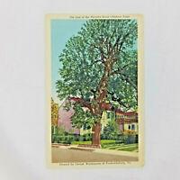 Vintage 1958 Postcard Last of the Thirteen Horse Chestnut Trees Fredericksburg