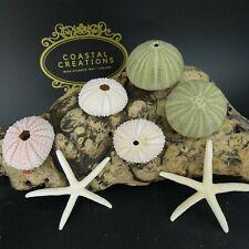 Urchin Craft Pack( 5 Large Sea Urchins & 2 Starfish) Coastal Wedding, Air Plants