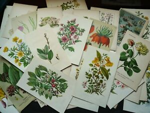 Collection of 200 Antique Prints of PLANTS, FLOWERS, TREES, BOTANY. GARDENING.