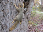 Taxidermy Wall Climbing Fox Squirrel Mount Rodent Coyote Raccoon Mouse