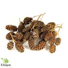 Alder Cones  20 Grams / Approx 70 - 100 cones