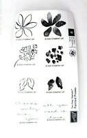 Stampin Up Painted Posies Cute Watercolor Flower Two Step Stamps